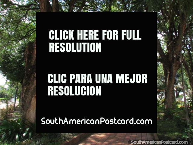 Lleno de árboles, Plaza Bolivar en Barinas. (640x480px). Venezuela, Sudamerica.