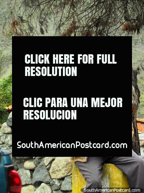 Un hombre local con el sombrero de Mucuchies se sienta al lado de una pared de piedra y la plaza. (480x640px). Venezuela, Sudamerica.