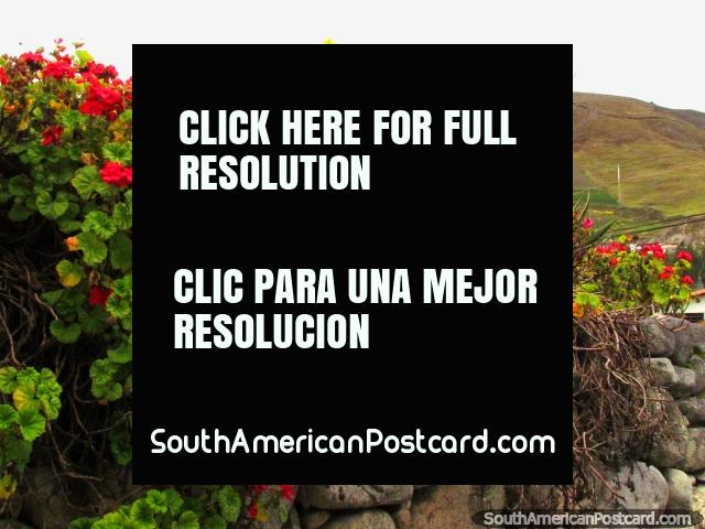 Red and pink flowers beside the road in San Isidro de Apartaderos. (640x480px). Venezuela, South America.