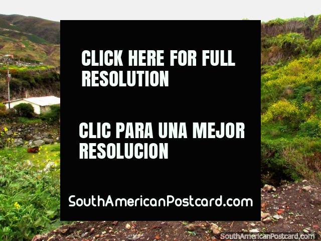 A dog enjoys the views from a point above the river around Biguznos/Pedregal. (640x480px). Venezuela, South America.