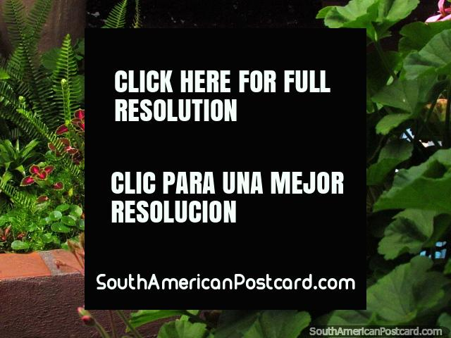 Pink flowers and leaves at the cultural house in Timotes. (640x480px). Venezuela, South America.